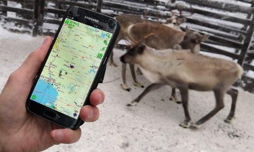 mobile app locates reindeer in Finland